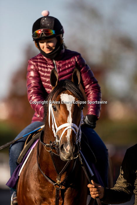 November 3, 2020: Mutasaabeq, trained by trainer Todd A. Pletcher, exercises in preparation for the Breeders' Cup Juvenile Turf at  Keeneland Racetrack in Lexington, Kentucky on November 3, 2020. Alex Evers/Eclipse Sportswire/Breeders Cup