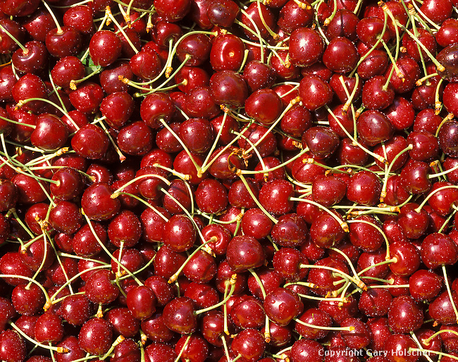 Bing Cherries in Bin.  Closeup