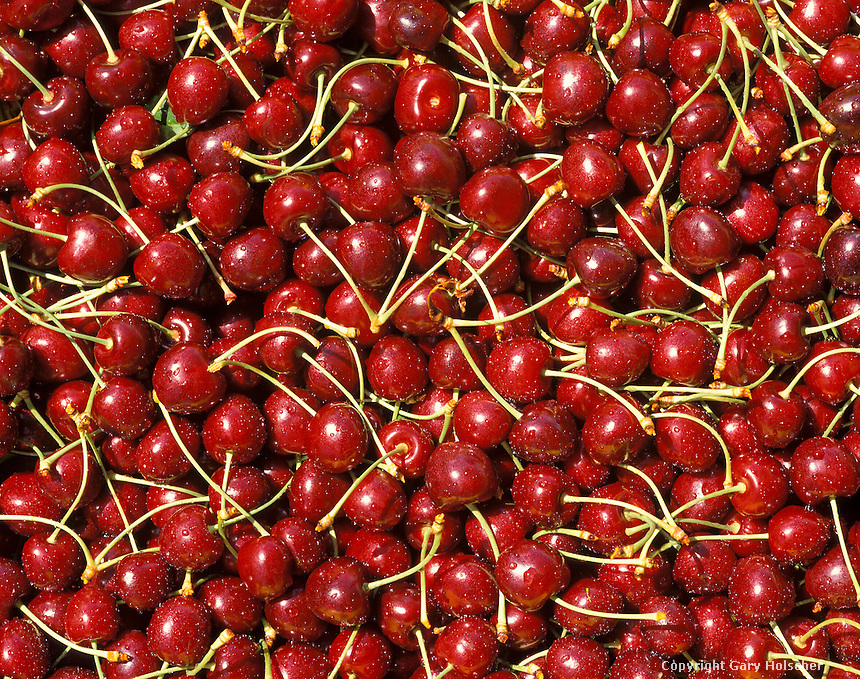 Bing Cherries in Bin.  Closeup