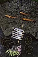 """Asie/Japon/Tokyo: Détail de brochettes de petits poissons séchés et algues ou """"Kombu"""" ou """"Nori"""" ou """"Wakame"""""""