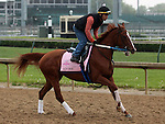 LOUISVILLE, KY - APRIL 23: Adore (Big Brown x Cozshesaidso, by Empire Maker) jogs on track in preparation for the Kentucky Oaks at Churchill Downs, Louisville KY. Owner Winchell Thoroughbreds LLC, trainer Steven M. Asmussen. (Photo by Mary M. Meek/Eclipse Sportswire/Getty Images)