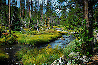 The creek at Virginia Cascades in Yellowstone National Park.