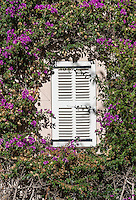 Buganvilla vine frames shuttered window, Saint Tropez, France