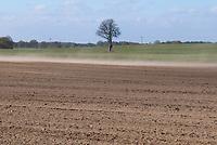 GERMANY, Plauerhagen, dried field due to drought, soil erosion by wind  / DEUTSCHLAND, Plauerhagen, trockenes Feld durch Trockenheit und ausbleibende Niederschlaege, Bodenerosion durch Wind