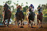 ARCADIA, CA - FEBRUARY 06: Hoppertunity #5, ridden by Flavian Prat defeats Imperative #7, ridden by Mike Smith and Donworth #2, ridden by Mario Gutierrez to win the San Antonio Stakes at Santa Anita Park on February 06, 2016 in Arcadia, California. (Photo by Alex Evers/Eclipse Sportswire/Getty Images)