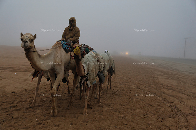 Racing camels are exercised in the morning to stay in shape.  Their humps are small compared to the camels bred for beauty that have larger humps and physique.  The camel is known as the ship of the desert.