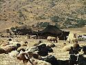 Iraq 2006 .Nomads' tents in Goma Span.Irak 2006.Un camp de nomades l'ete a Goma Span