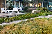 Modern courtyard with California native plant garden with Carex pansa lawn (Pacific dune sedge), Santa Barbara,