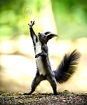 Squirrells reaching for bubbles by Sergey Polyushko