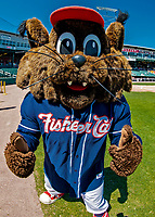 18 July 2018: The New Hampshire Fisher Cats Mascot Fungo poses for a photo prior to games against the Trenton Thunder at Northeast Delta Dental Stadium in Manchester, NH. Mandatory Credit: Ed Wolfstein Photo *** RAW (NEF) Image File Available ***