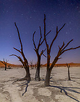 Stars over calcified camel thorns (Vachellia erioloba), Sossusvlei, Namib-Naukluft National Park, Namibia<br /> <br /> Canon EOS-1D X Mark II, Sigma 20mm F1.4 DG HSM | Art 015 lens, f/1.4 for 6 seconds, ISO 1000