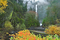 Multnomah Falls and fall foliage in Columbia River Gorge National Scenic Area, Oregon