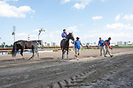 Connections of Social Inclusion with Luis Contreras up, celebrate their win over favorite Honor Code in a 3 year old allowance race at Gulfstream Park. Social Inclusion also set a new track record fpr the 11/16 distance at Gulfstream Park, Hallandale Beach Florida. 03-12-2014