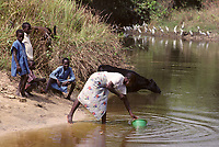 Yorobodi, Ivory Coast. Young Woman and Cow Take Water from Same Pond.