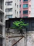 Hongkong, China, Asien, urbane Flora<br />  ***Keine Social_Media Nutzung***<br /> <br /> Engl.: Asia, China, Hong Kong, urban flora, plant, houses<br /> ***No social media use***