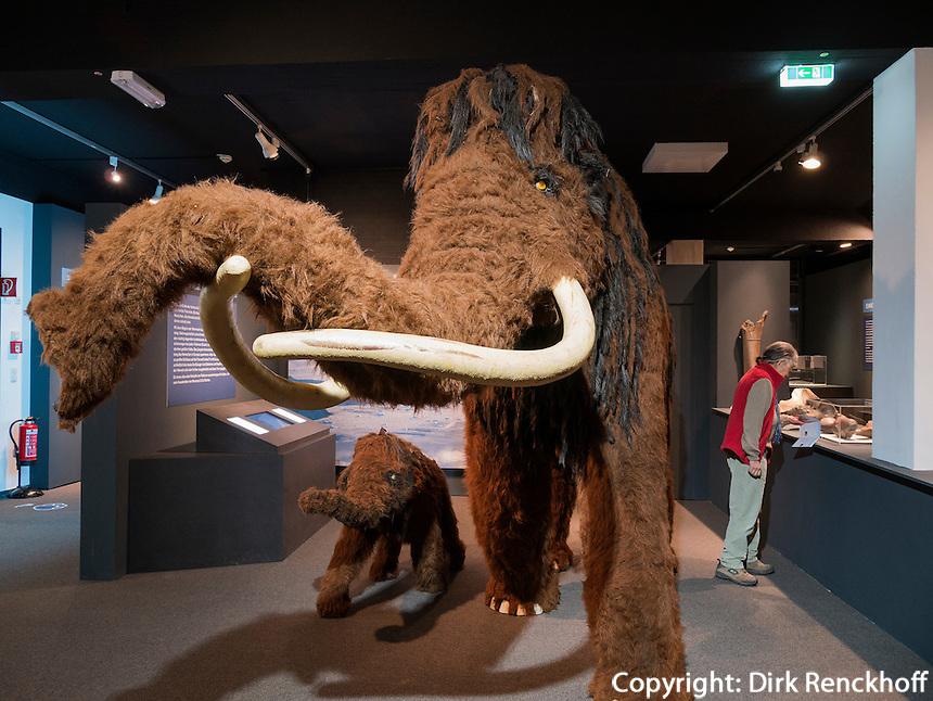 Wollhaarmammut, Helms-Museum = Archäologisches Museum Hamburg, Deutschland, Europa<br /> wooly mammoth, Helms-Museum = Archaeological  Museum Hamburg, Germany Europe