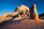 Ponderorsa pines and hoodoos, Zion National Park, Utah, USA
