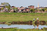 Myanmar, Burma.  Cleaning Waterway, Inle Lake, Shan State.
