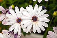 Details in Nature - Macro Flowers