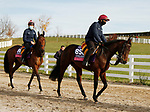 Mother Earth and Snowfall, trained by trainer Aidan P. O'Brien, exercises in preparation for the Breeders' Cup Juvenile Fillies Turf at Keeneland Racetrack in Lexington, Kentucky on November 5, 2020.