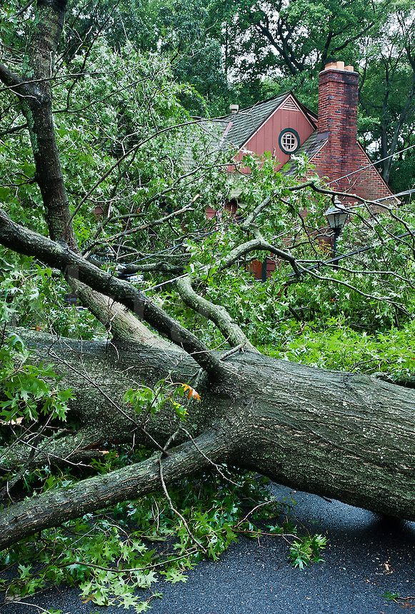 Hurricane tree damage, Hurricane Irene 2011, Moorestown NJ, New Jersey