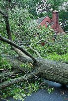 Hurricane tree damage, Hurricane Irene 2011, Moorestown NJ, New Jersey