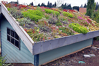 Roof of building covered in Rock Succulent plants. Oregon Garden. Oregon