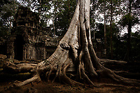 Ruins , Siem Reap<br /> , Cambodia<br /> <br /> PHOTO :  Agence Quebec Presse<br /> <br /> <br /> <br /> <br /> <br /> PHOTO : Agence Quebec Presse