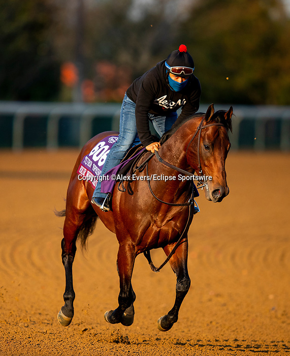 November 1, 2020: Four Wheel Drive, trained by trainer Wesley A. Ward, exercises in preparation for the Breeders' Cup Turf Sprint at  Keeneland Racetrack in Lexington, Kentucky on November 1, 2020. Alex Evers/Eclipse Sportswire/Breeders Cup /CSM