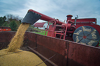 Soybean harvest at the Braun Farm in Westerville OH