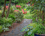 Vashon-Maury Island, WA: Stone pathway leads to garden with red adirondack chair. Planting beds feature hostas, mahonia, pieris, Japanese forest grass and barberries.