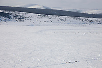 Musher crosses the Mcarthy Marsh, in the Bendeleben Mountains on the Seward Peninsula, during the 2008 All Alaska Sweepstakes sled dog race.