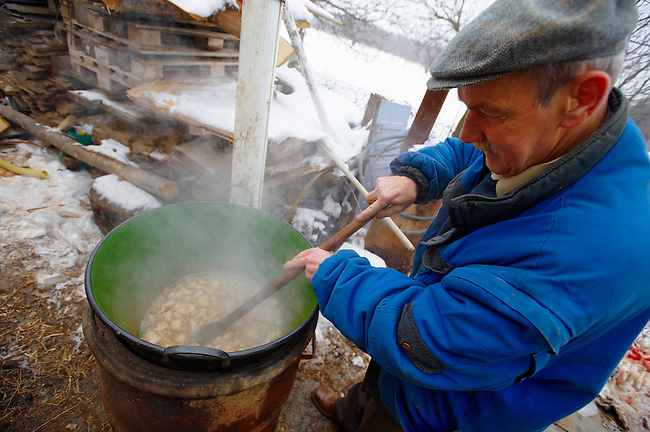 Traditional pig killing day - Valem Hungary