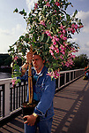 Chelsea, London. 1997<br /> At the ringing of the bell at 4pm on the last day of the annual Chelsea Flower Show, sedate English garden lovers scramble to buy the RHS prize entries, in this case yellow chrysanthemums at knock down prices.