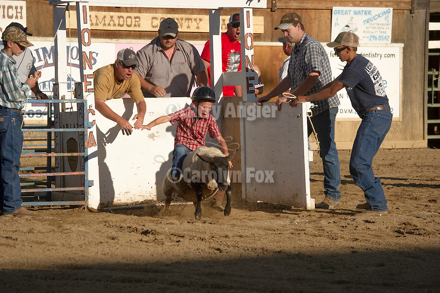 74th Amador County Fair, Plymouth, Calif...Little buckaroos mutton bustin', round one