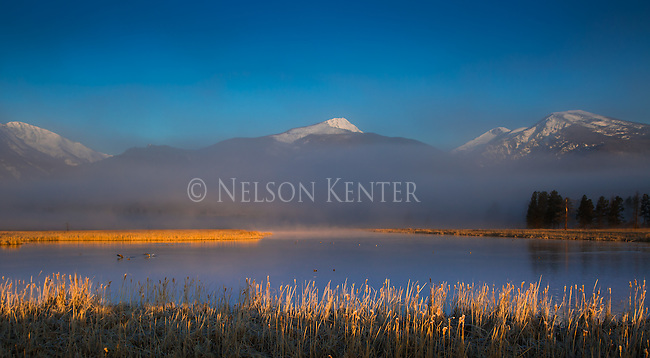 Early morning light shining on the cattail reeds in the Bitterroot Valley in western Montana. The snow capped Bitterroot Mountains form the western side of the valley.