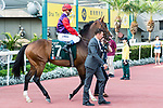 Jockey Olivier Peslier riding Dicton during the Audemars Piguet Queen Elizabeth II Cup at Sha Tin Racecourse on April 30, 2017 in Hong Kong, China. (Photo by Marcio Rodrigo Machado / Power Sport Images)