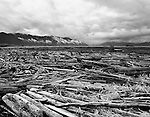 Jumbled and chaotic dead logs lead through a scene of decay.