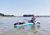 BNPS.co.uk (01202 558833)<br /> Pic: Rachael Towers/BNPS<br /> <br /> Pictured: Rachael Towers was out for the day with her friend Sam Ball, 30.<br /> <br /> A 'showboating' seal gave two paddleboarders the experience of a lifetime when he decided to sunbathe on their boards and even pose for a selfie.<br /> <br /> Rachael Towers said she was afraid and tried to steer clear of the young seal but it made a bee-line for her board.<br /> <br /> Initially she was terrified it was going to pop her inflatable paddle board with its sharp nails or scratch her.<br /> <br /> But after half an hour floating around together, the pair were firm friends.