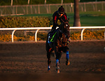 OCT 25: Breeders' Cup Juvenile  entrant Eight Rings, trained by Bob Baffert, gallops with Humberto Gomez up, at Santa Anita Park in Arcadia, California on Oct 25, 2019. Evers/Eclipse Sportswire/Breeders' Cup