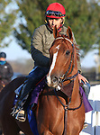 Channel Maker, trained by trainer William I. Mott, exercises in preparation for the Breeders' Cup Turf at Keeneland Racetrack in Lexington, Kentucky on November 3, 2020.