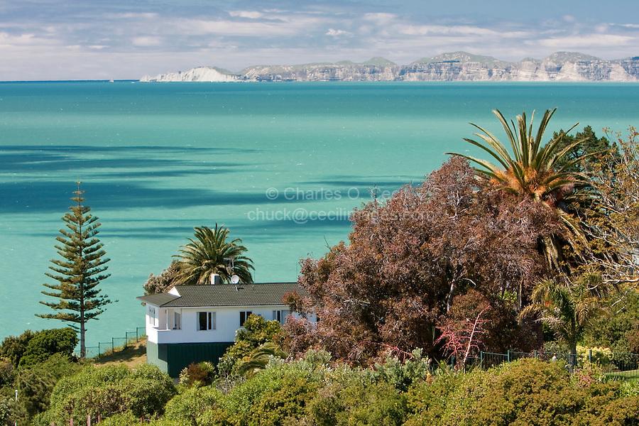 Hawke's Bay, Norfolk Pine, Palm Trees, Napier, north island, New Zealand.