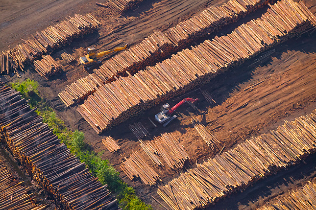 Piles of logs at sawmill
