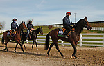 Order Of Australia and Circus Maximus, trained by trainer Aidan P. O'Brien, exercises in preparation for the Breeders' Cup Mile at Keeneland Racetrack in Lexington, Kentucky on November 5, 2020.