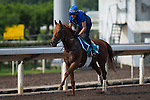 SHA TIN,HONG KONG-APRIL 25: Safety Check ,trained by Charlie Appleby,exercises in preparation for the Champions Mile at Sha Tin Racecourse on April 25,2016 in Sha Tin,New Territories,Hong Kong (Photo by Kaz Ishida/Eclipse Sportswire/Getty Images)