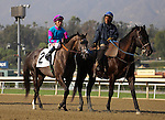 I'll Wrap It Up with Tyler Baze aboard in the post parade for the Grade III Sham Stakes at Santa Anita Park in Arcadia, California on January 11,2014. (Zoe Metz/ Eclipse Sportswire)