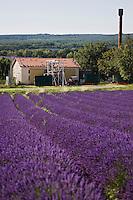Europe/France/Rhône-Alpes/26/Drôme/Salles-sous-Bois:  Distillerie de Lavande et champ de Lavande