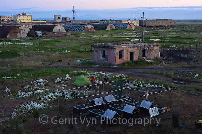 Spoon-billed Sandpiper chick enclosure in Anadyr sitting amongst the ruins of a military installation. The chicks were guarded 24/7. Logistics for moving the chicks from the village to the UK were extremely challenging to accomplish in Russia. Chukotka, Russia. July.