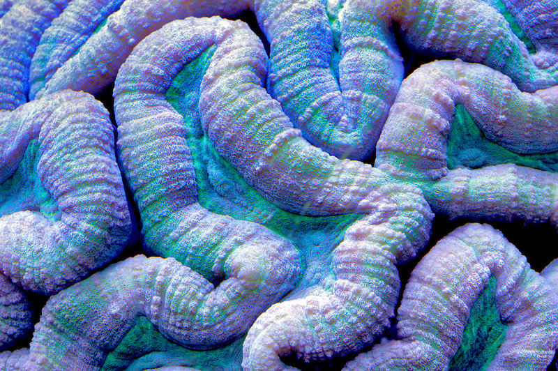 Brain coral. Upscales store. Tualitin. Oregon