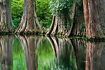Cypress grove, South Carolina